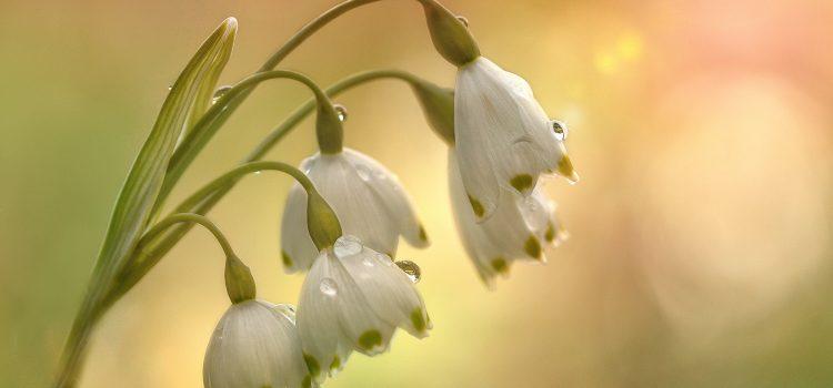 Gyermekkorunk 10 legszebb tavaszcsalogató verse