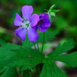 Fésűs Éva: Kié a virág? – Legkedvesebb mesénk a mesék világnapjára